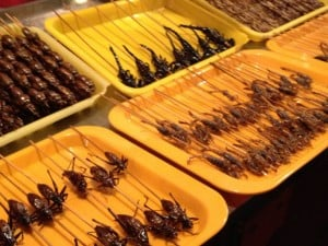 Beijing Night Market, Beijing - We topped off the night with the Night market. Scorpion anyone? Maybe a squishy silk worm, or a giant spider? Yuck!